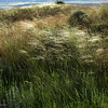 AND GRASSES GALORE