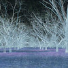 Night_FOREST4