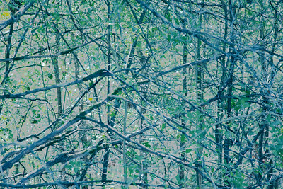 Trees_Creamy
