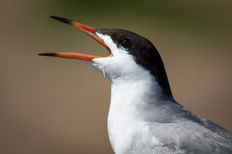 Wil Anderson Nature