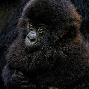 Sbrand_Africa_Rwanda_7356_-2_-2_