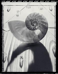 Nautilus, 1993, B&W