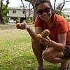 Gathering mangoes.