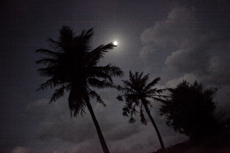 Moon in the palms.