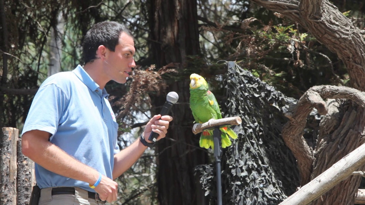 The  parrot is cute, but the bird at the end has a much more practical skill.