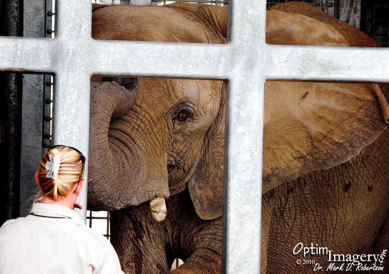 Elephant as elephant.