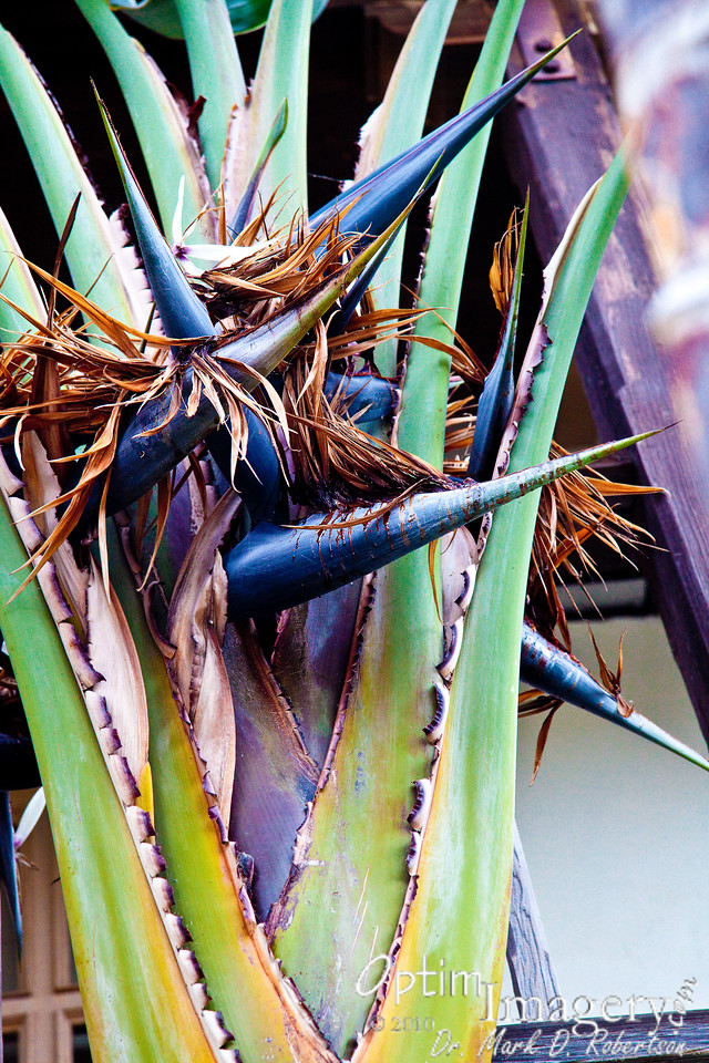 """Some of the individual """"birds"""" from the giant bird of paradise."""