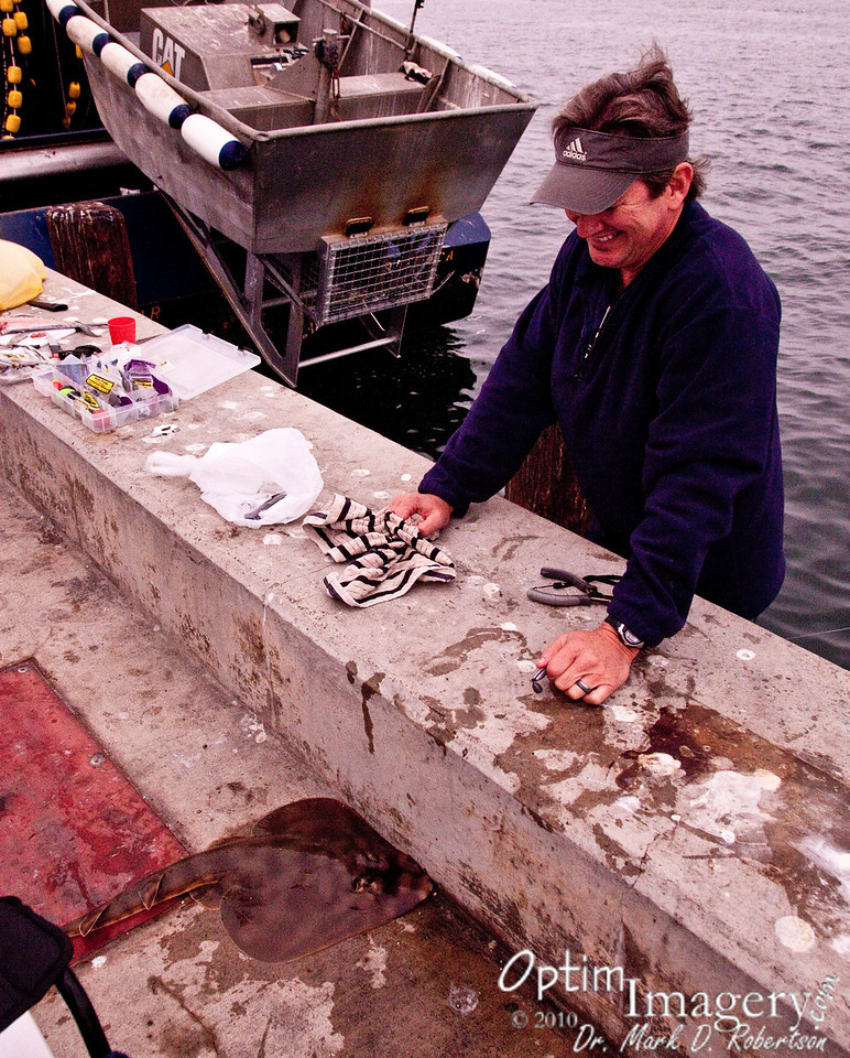 """Out on a pier.  Signs everywhere said """"No Fishing or Swimming,"""" but poles were also everywhere.  This fellow had caught a banjofish.  He released him back into the bay after showing him to us."""