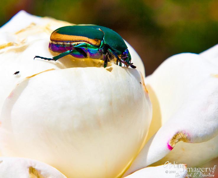 Colorful little buggar, isn't he!