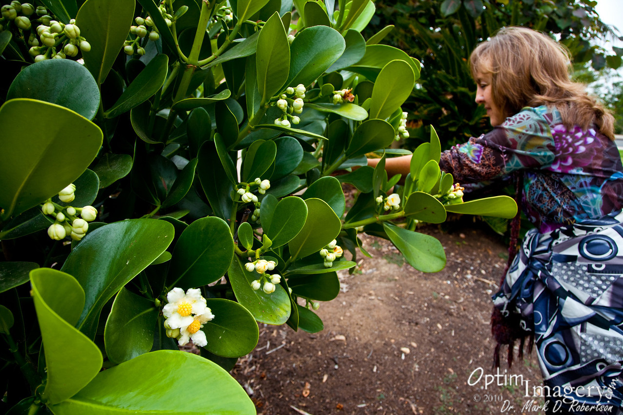 Looking at some of the plants on our way to the Balboa Park Botanical Garden.