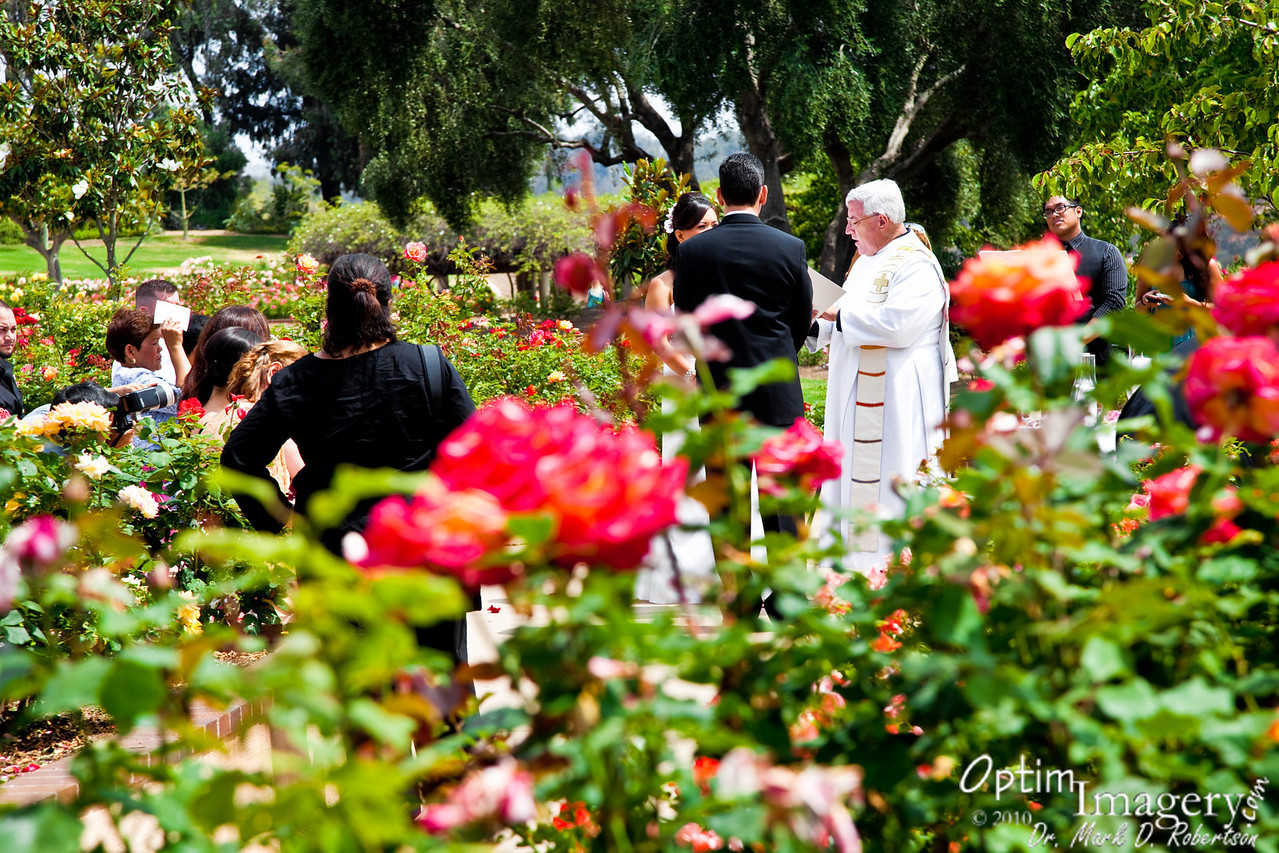 A wedding in the Balboa Park Rose Gardens.