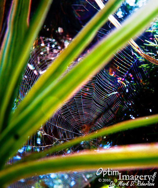 When I see the lighting on spider webs creating rainbows, I just can't help myself -- no matter where I am.  Gotta get a shot!
