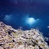 """We now start our second dive of the day.  I guess this is my present favorite """"dive destination.""""  For lack of a better name, I call it """"Twin Sunroof Cave."""""""