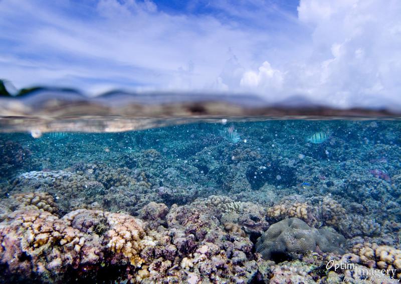 Sky above, reef below.