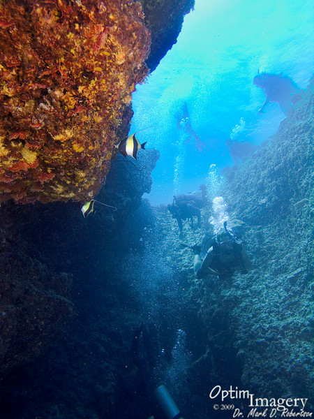Two Moorish idols (Zanclus cornutus) look on as their realm is invaded by the bubbling aliens.