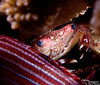 The red and white striped thing between you and the crab is a soldier fish of some type.