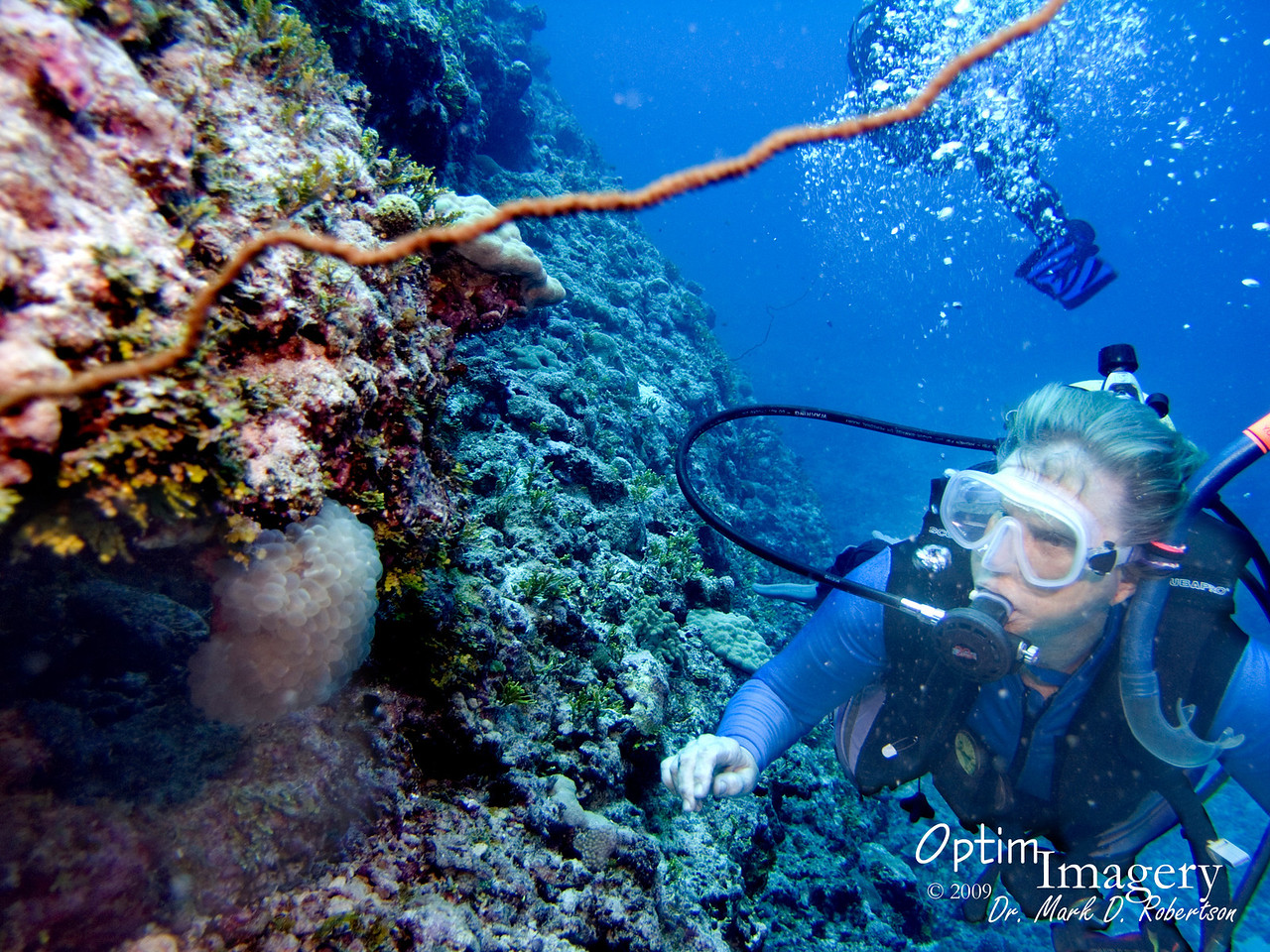Here, Mary is looking at some Bubble coral, also called Grape coral (Plerogyra sinuosa).  I've heard that these guys can pack a noticeable sting, but Mary touched this one and had no ill effects.