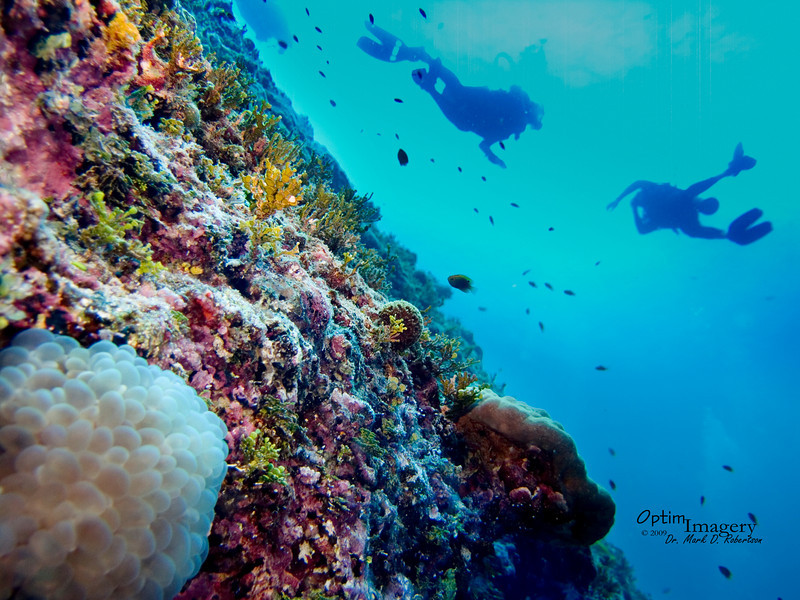 Same Bubble coral.  Divers in the background.