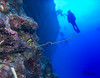 Whip coral in the foreground.  Rose floating above.  Various assorted other divers in the background.