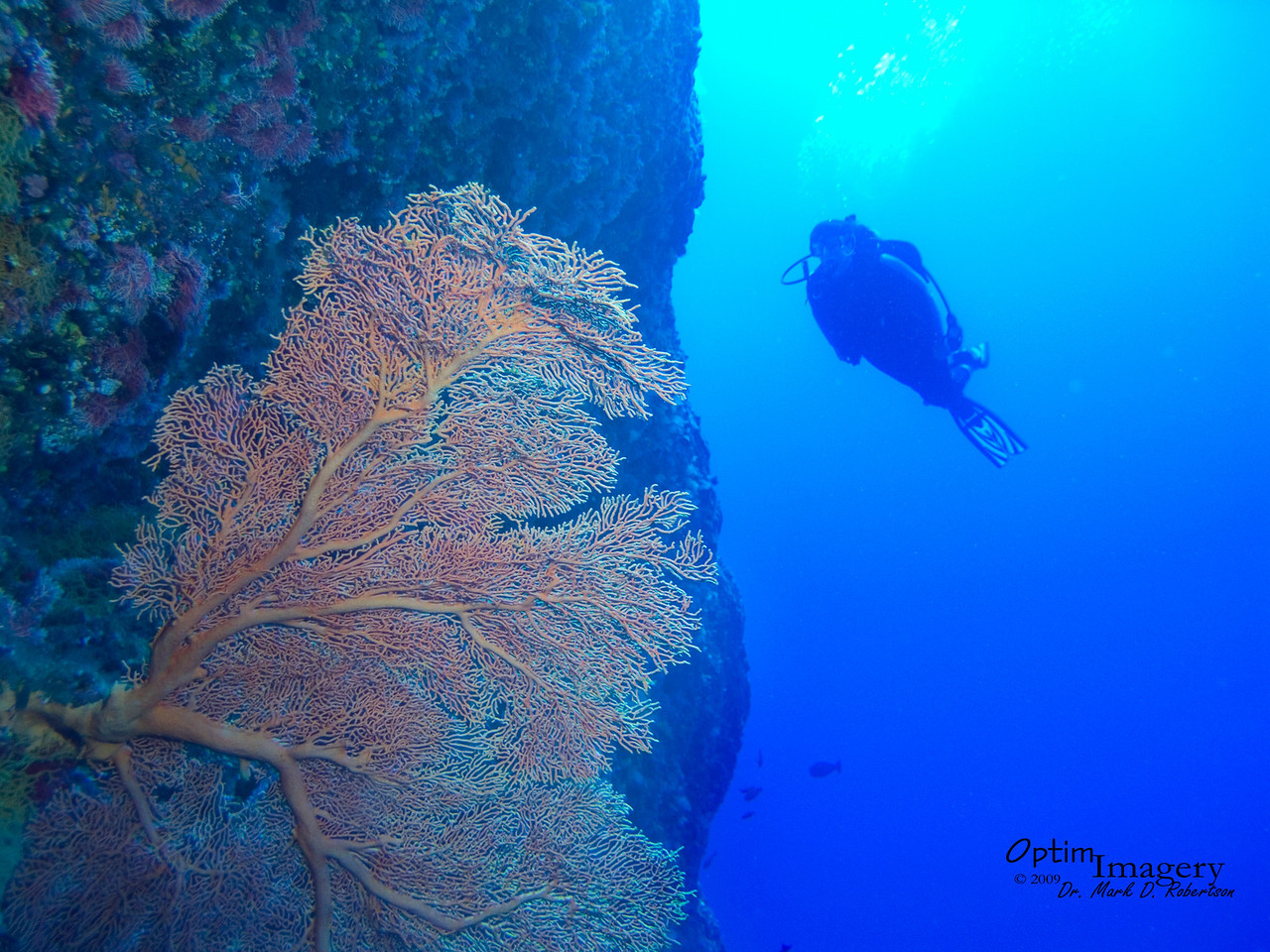 Rose approaches one of our spectacular sea fans.