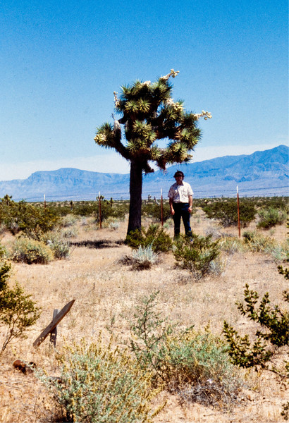 """The same year as the first """"test tube baby"""" (Louise Brown) was born, I discovered the distinct pleasure of standing beneath a yucca tree in the Utah (or maybe Nevada) dessert."""