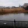 Bird Sanctuary at Ueno Park