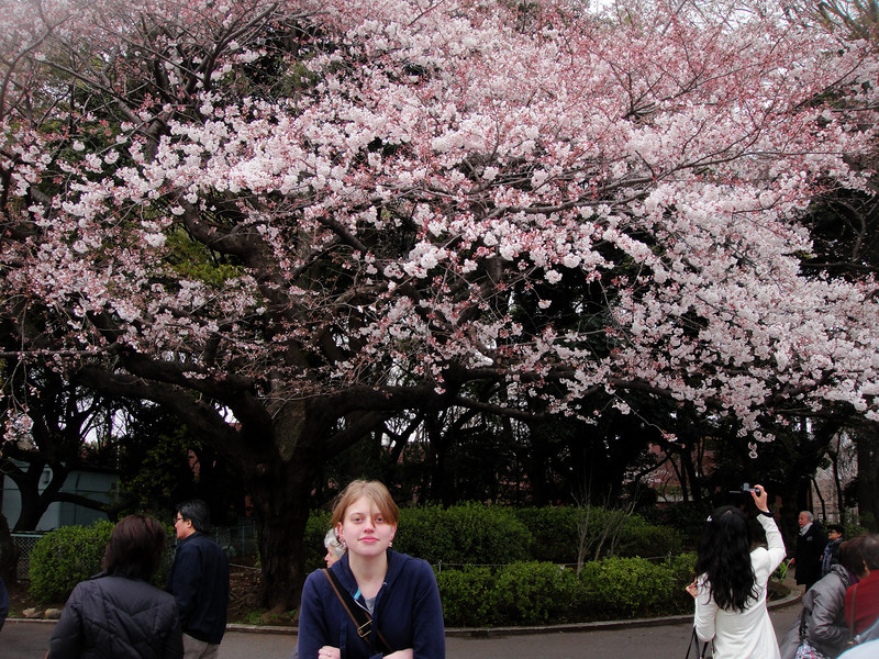 How fortunate that we were there during the Cherry Blossom Festival
