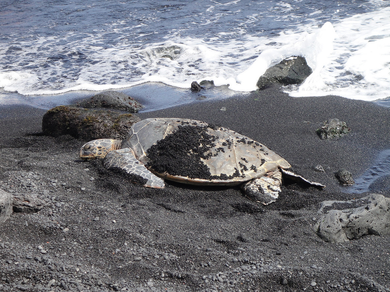 This is one of the only places where turtles sun themselves on the beach.  So nice to get to see them in nature.