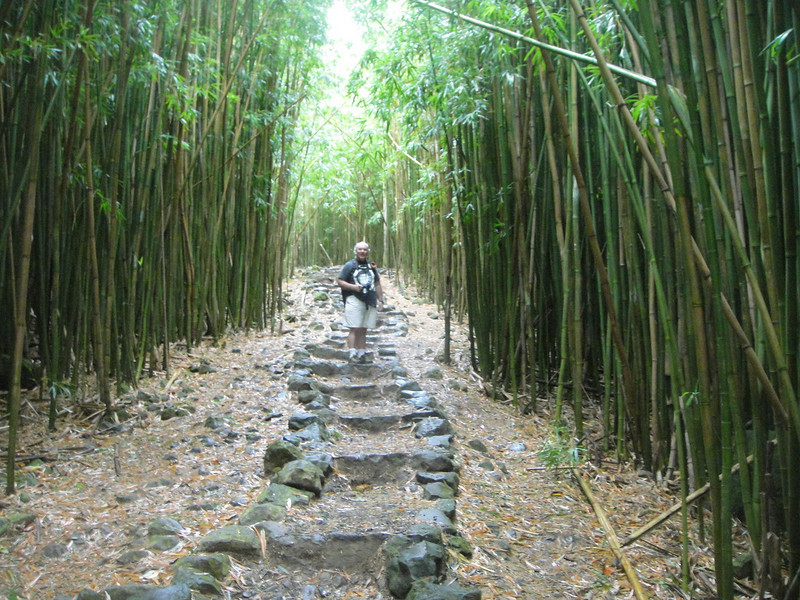 The trail through the bamboo forest was about a mile long