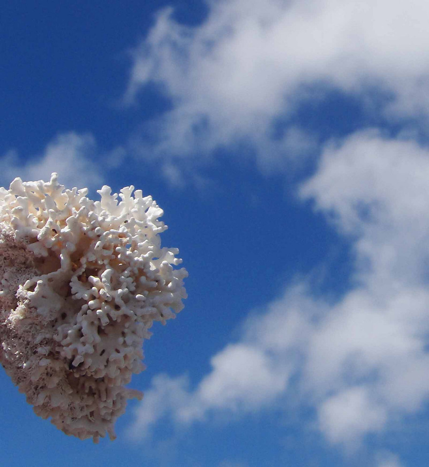 white coral and clouds
