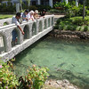 Palms Resort, feeding the sharks and a variety of other fish,
