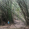 It was a total surprise to me to find patches of bamboo up hear.