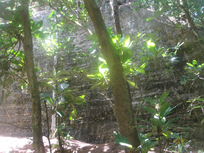 Beautiful little trail heads off through the jungle