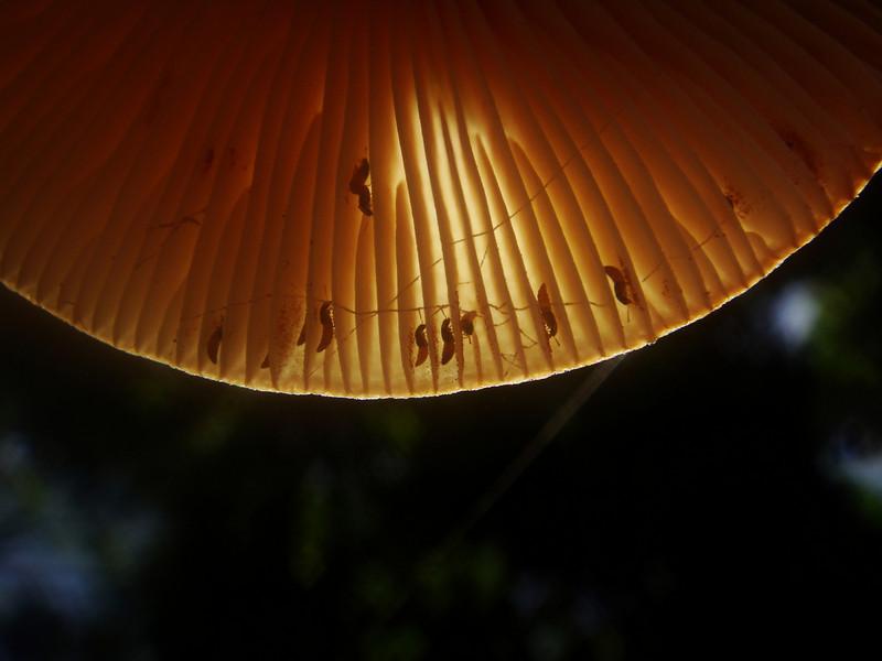 home sweet home on the underneath side of a mushroom near Talafofo Falls, Saipan