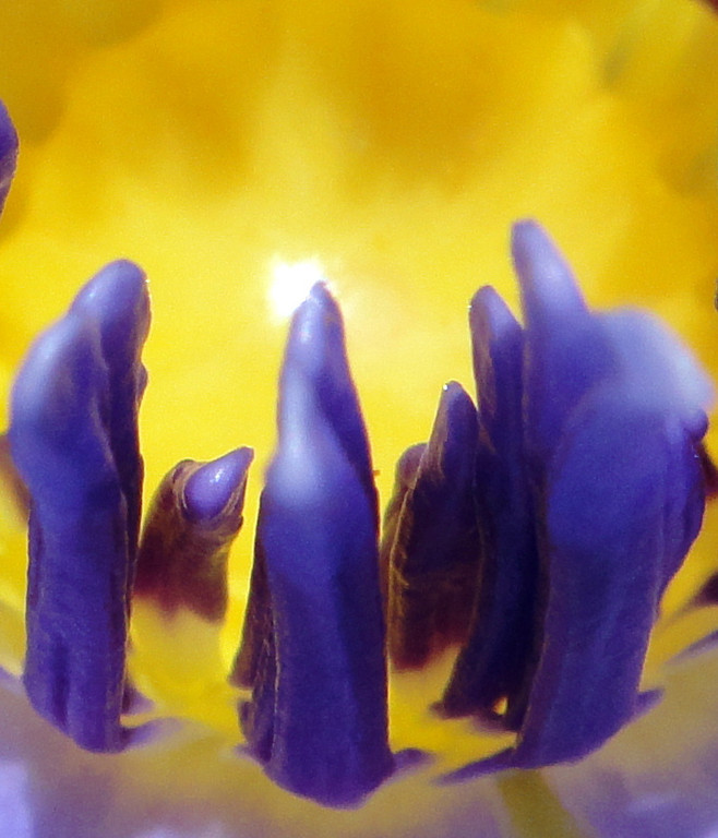 Beings going to the Light....or more realistically,  a close-up of the center of a lotus flower