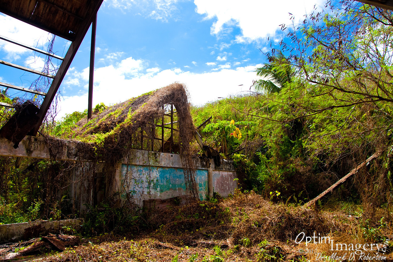 Nice little jungle fix-er-upper with natural insulation on the roof.