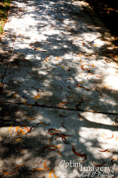 Leaves on the sidewalk.