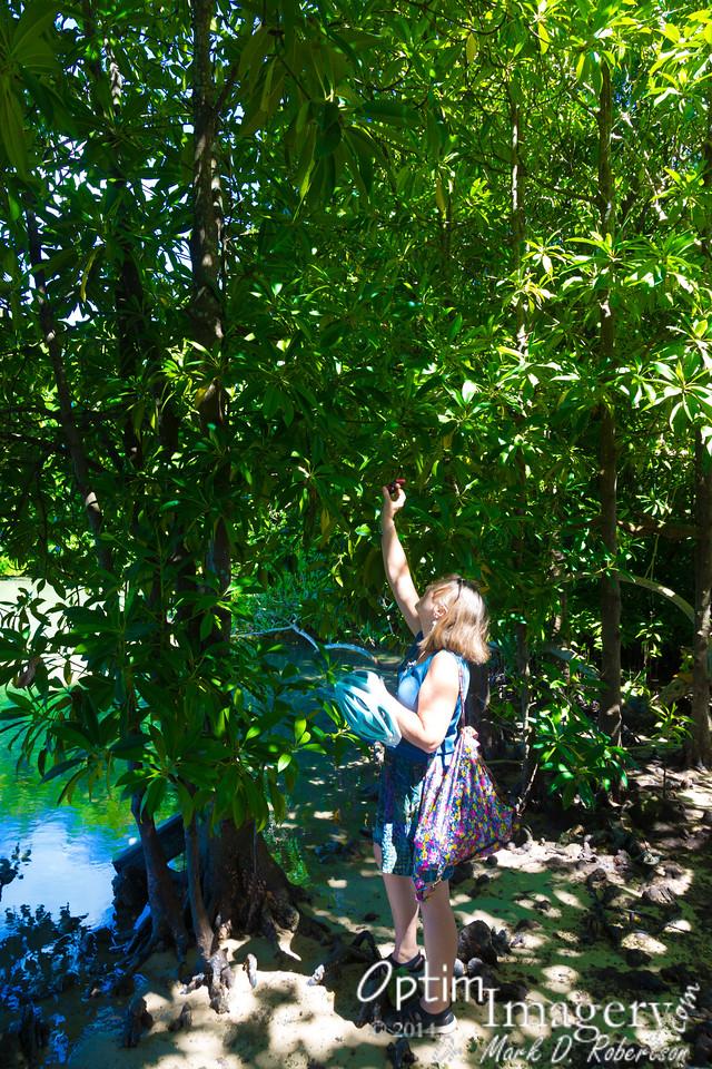 Bev photographs mangrove flowers.