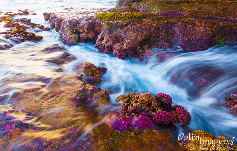 And the saturation in the wet corals gives a spectacular foreground to the dancing colors of the mesmerizing waves.