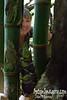 Bev admires a baby bamboo.