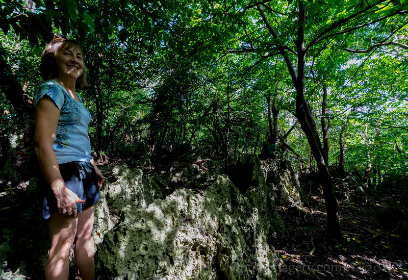 LIMESTONE FOREST