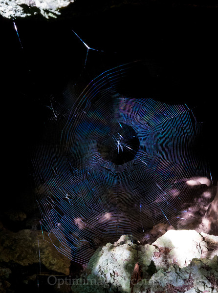 There are actually 2 webs here, with a smaller one just a few inches in front of the larger, more dramatic one.