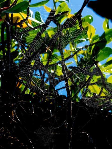 Who can match the graceful artistry of the widely-detested spider?