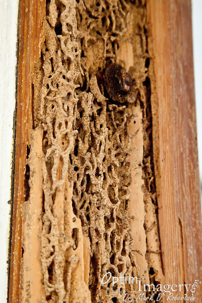 "Yep.  I believe it may be time to call the Orkin Man!<br /> <br /> ""A termite once knocked on wood,<br /> tasted it and found it good.<br /> <br /> And that is why your cousin May<br /> fell through the parlor floor today!""     --  Ogden Nash"