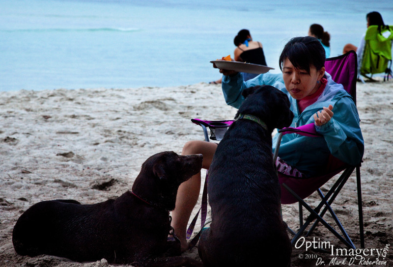 Atsuko and her salsa-loving dogs.