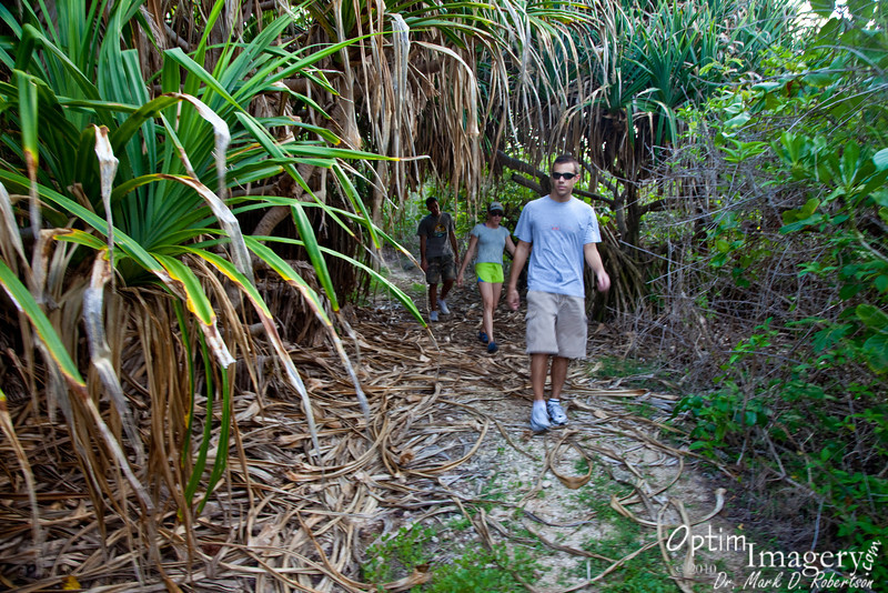 Walking through the Pandanus (also called walking pine).