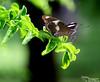 --- moths to entertain them ----