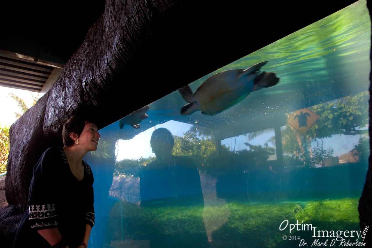 Stepha checks out the Green Sea Turtles.