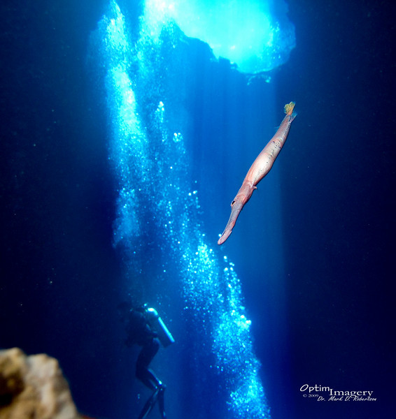 I'm now back down on the floor of the cave, looking up at the sunroof hole.  You see a Trumpetfish (Aulostomus chinensis) hovering above.  These guys tend to hover, nose down, a few feet to a few inches above the bottom.  Then, when they see a tasty-looking little morsel of a fish swimming under them, they dart down and catch dinner.  They are, however, usually much more leery of people than is this one.  I was afraid that he may be sick or something, but he did later dart away, so I think he just was not afraid.  It was fun to be able to see him from this angle.