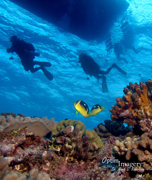 A pair of Fourspot butterflyfish (Chaetodon quadrimaculatus) watching the divers return to the boat.